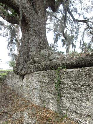 darien tree