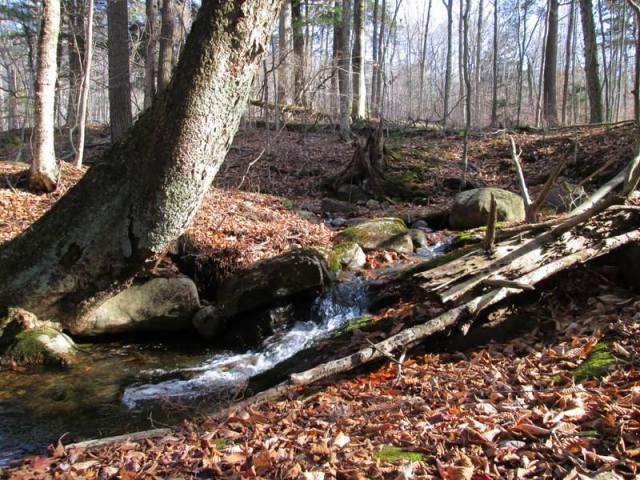Forest bathing falls