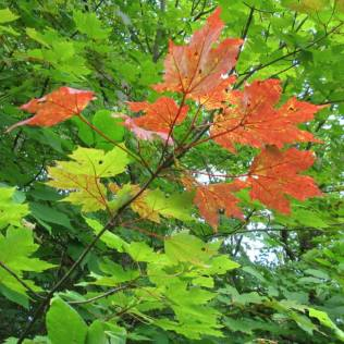 Forest bathing leaves
