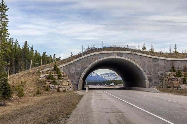 banff_rebeccalatson_83q1494_wildlife_overpass_over_hwy_1