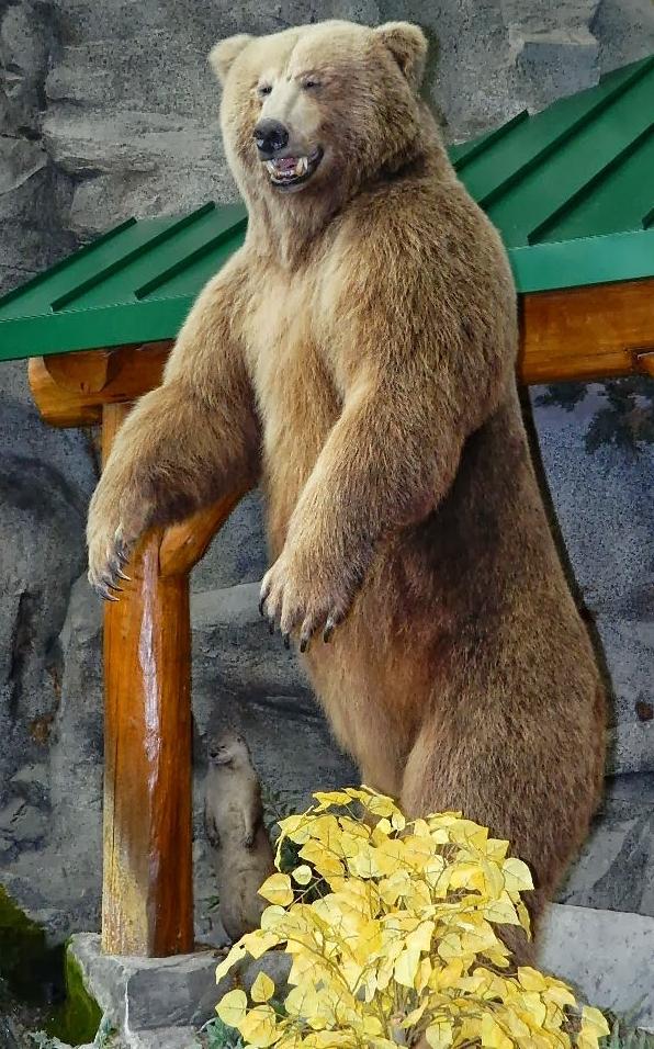 grizley bear